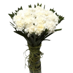20 White Carnations