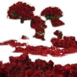 Room Full of Roses 500 Roses