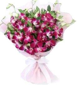 10 Purple Orchids