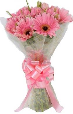 10 Pink Gerbera Bunch