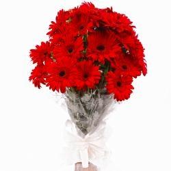 15 Red Gerbera