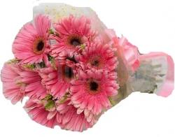 12 Pink Shiny Gerbera