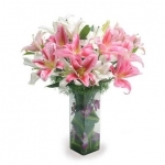 Pink N White Oriental Lilly