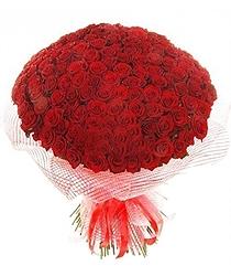 Pure romance 100 Roses