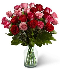 20 Delight Roses
