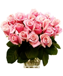 20 Gorgeous Pink Roses
