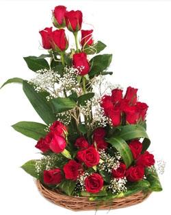 Rose Elegance 24 Roses