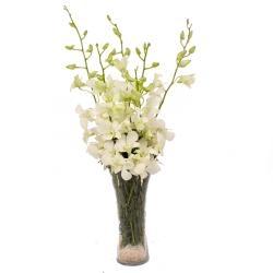 Vase Arrangement White Orchids