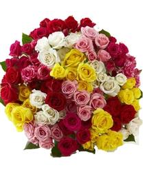 75 Multicolored Roses