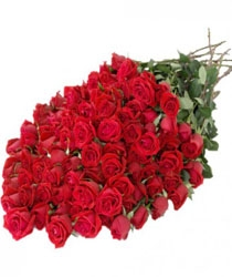 Sensation 50 Red Roses