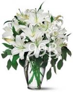 White Lily In Vase