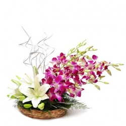 Lilies Orchids