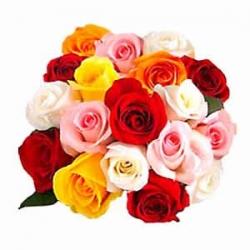 Fascinating Mixed Rose